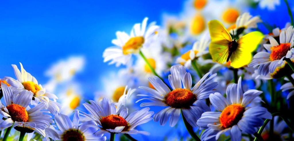 blommormajorskornamaj